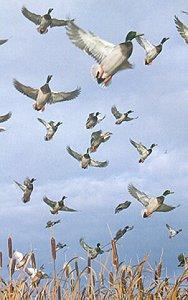 EVOLUCIÓN: Patos convivieron con dinosaurios